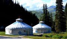树林中的蒙古包